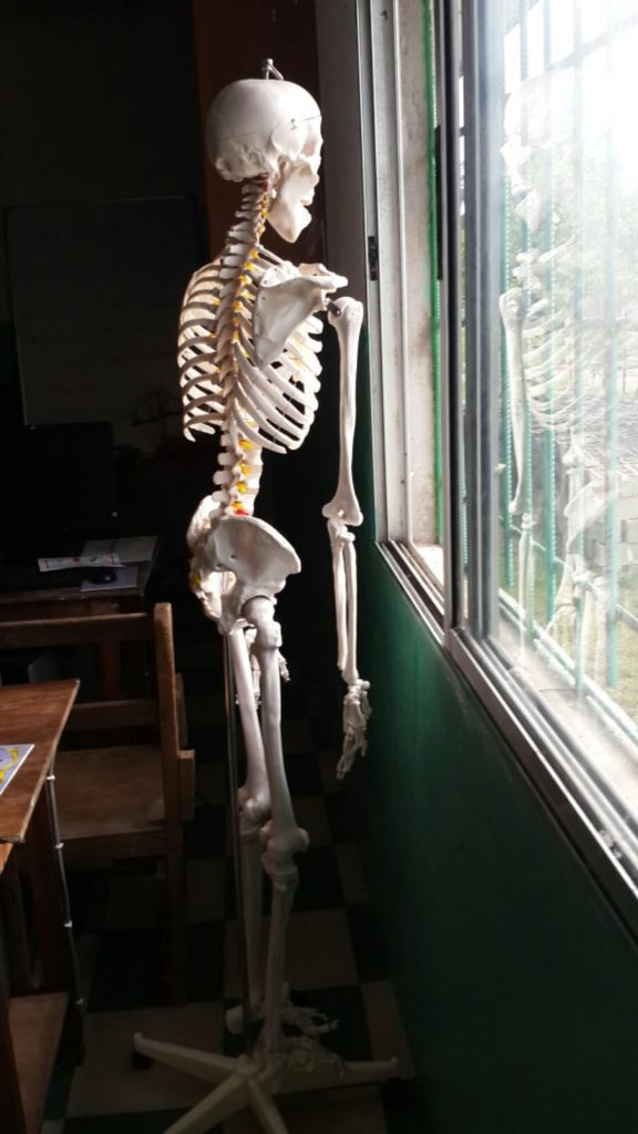 A model human skeleton gazed out the window of the science lab.